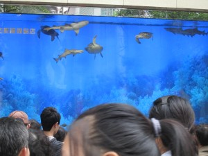 Aquarium on Nanjing Rd