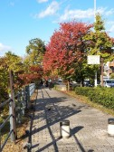 Walking around Kyoto